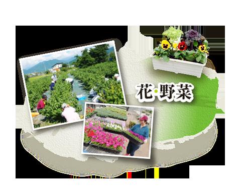 クリックして「花・野菜」商品紹介ページへ移動します
