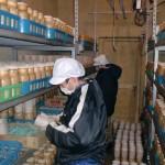 えのき茸の紙巻き作業(山﨑農園)