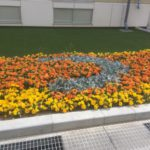画像:マルチグループより 花壇の植栽依頼承ります!!