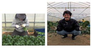 画像:🍅はやぶさグループより🍅小松菜収穫を頑張っています!