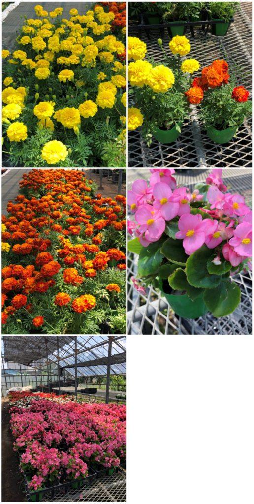 画像:フライルグループより 季節のお花のご注文承っています!!